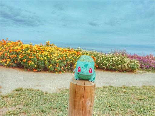 フシギダネと花畑(フルサイズ)